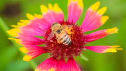 East Line Ranch Bee Business